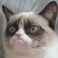 grumpy-cat-copywriting-900x423