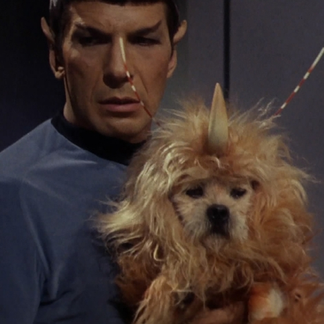 gh3ws-1445612943-embed-spacedog_spock